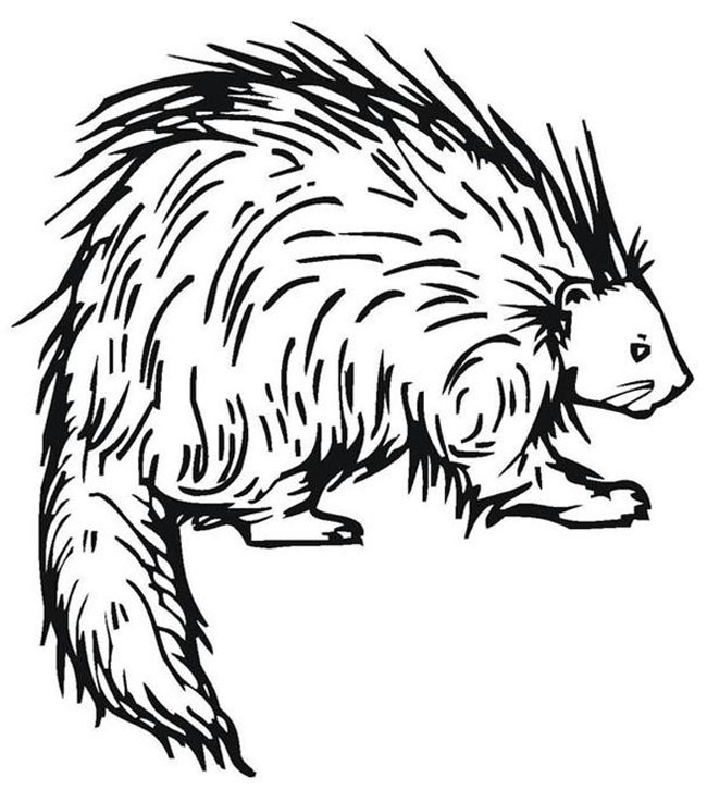 Image of a porcupine to print and color.